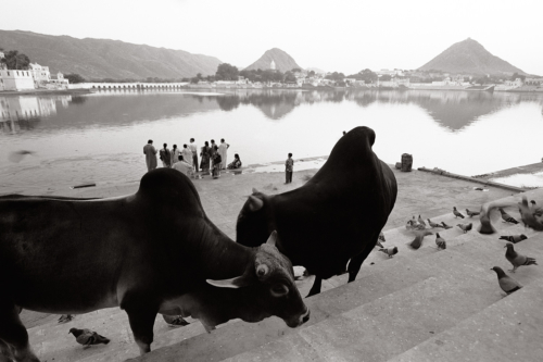 Pushkar, India- Fine Art Black and White photography. Glen Green Photography