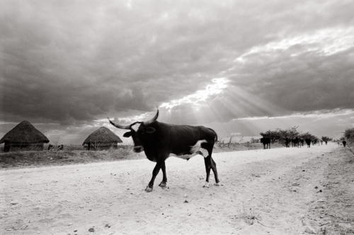 Zimbabwe - Fine Art Black and White photography-Glen Green Photography