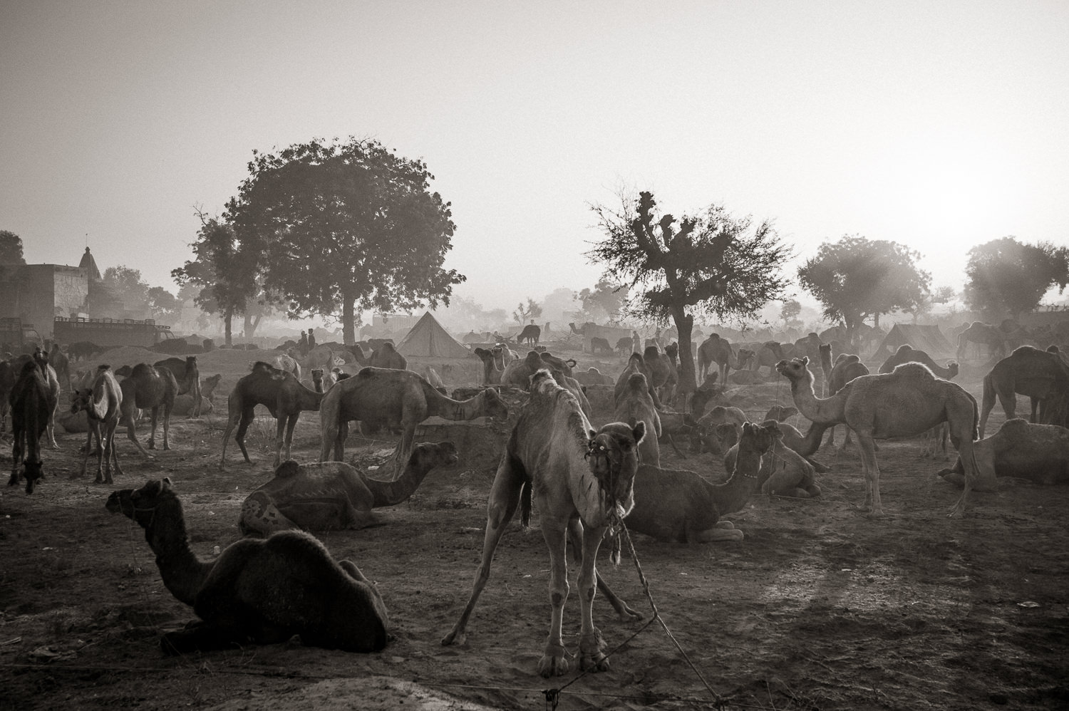 Camel fair, Rajastan, India- Fine Art Black and White photography. Glen Green Photography